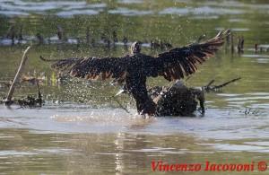 Salto del cormorano