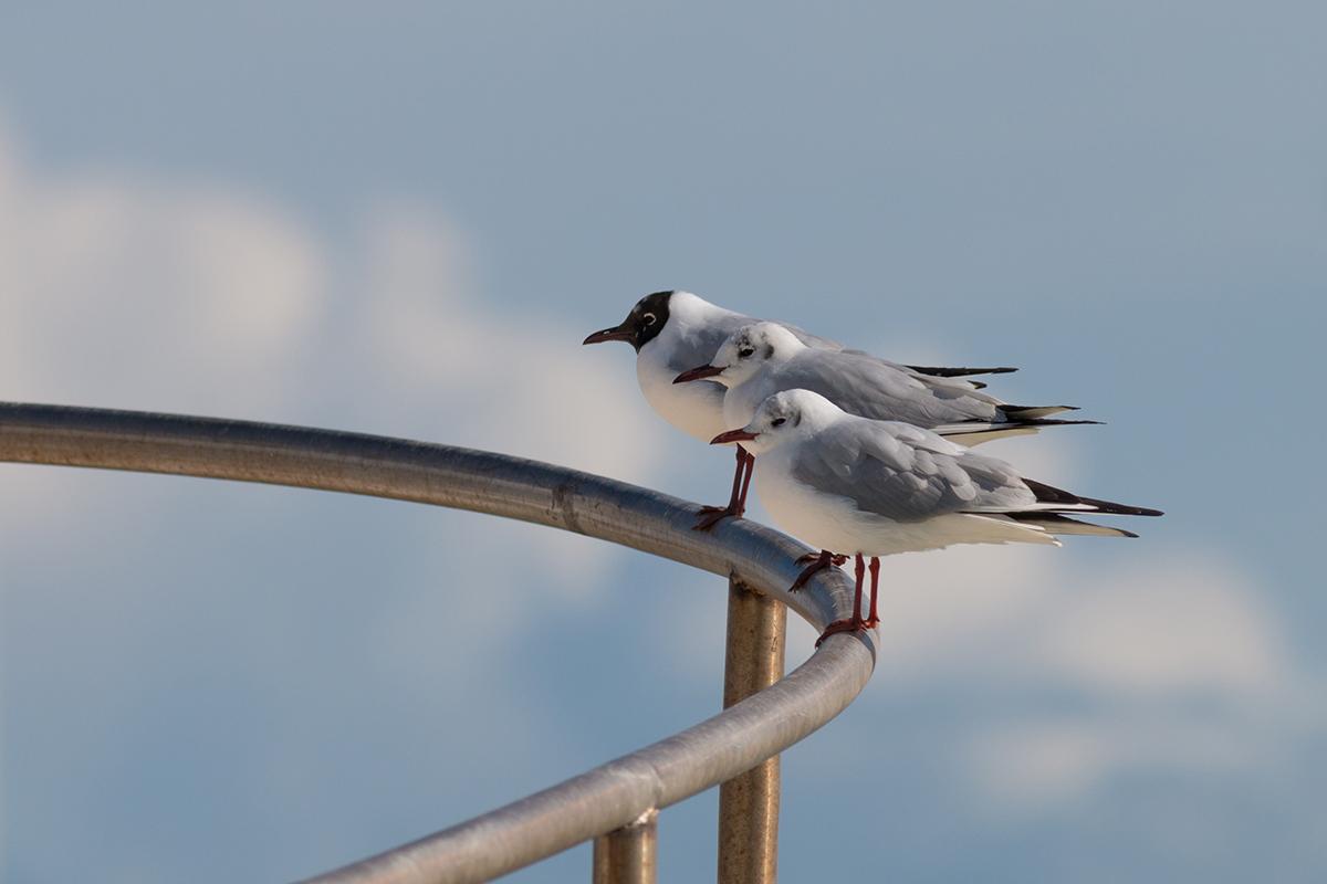 Uccelli Fotoabruzzo